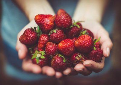Récolter ses fraises